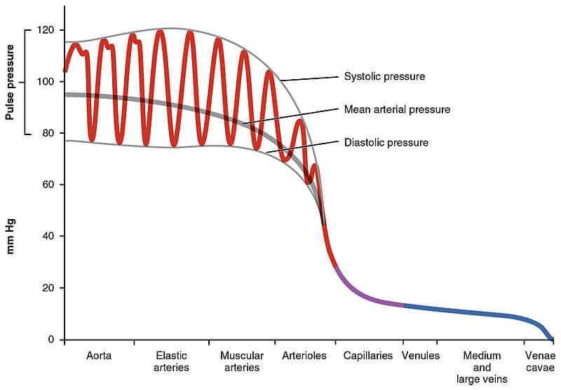Blood Pressures Vessels