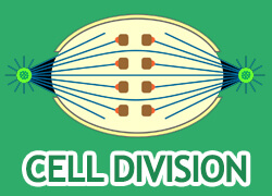 Cell Division Thumbnail